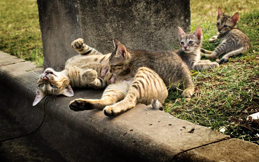 Katzenfotos sind In
