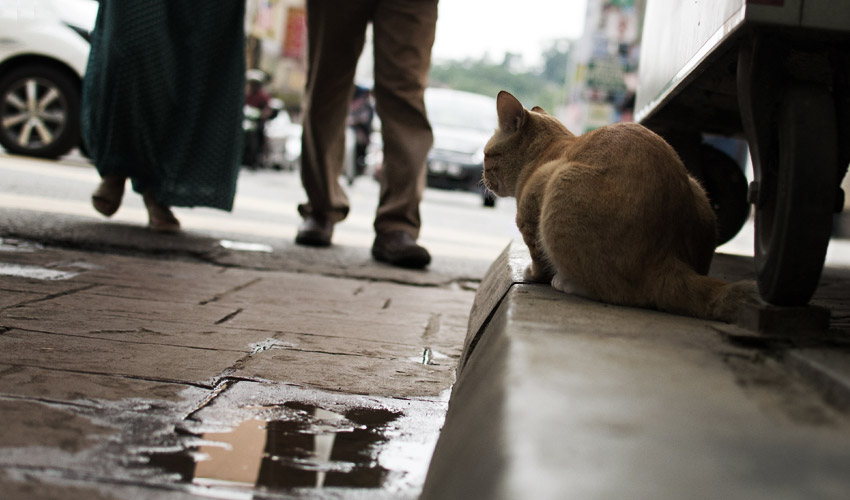 Katze in Chinatown