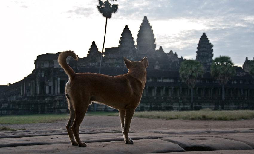 Hund vor Angkor Wat