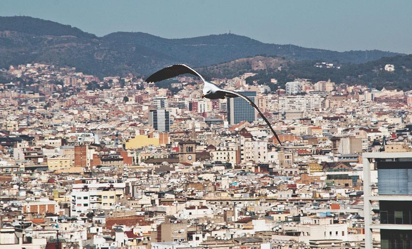 Eine der vielen Möwen: Typisch für eine Hafenstadt