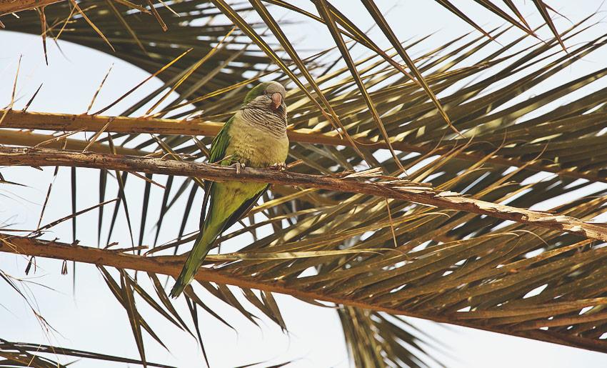 Ein Vogel im Parc Güell