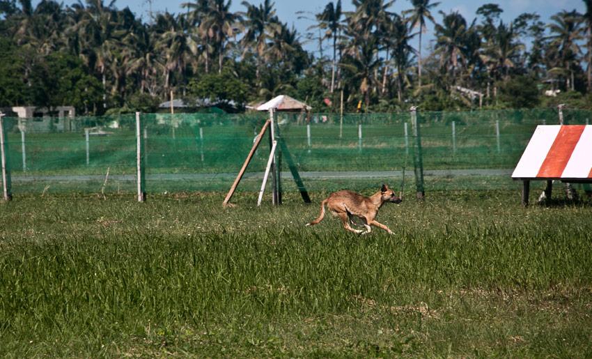 hund-kalibo-flughafen