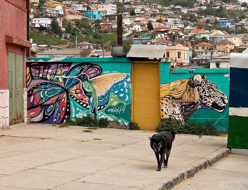 hund-valparaiso-stadt