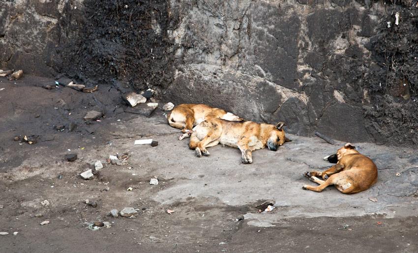 hunde-santiago-fluss