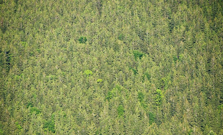 Jede Menge Bäume