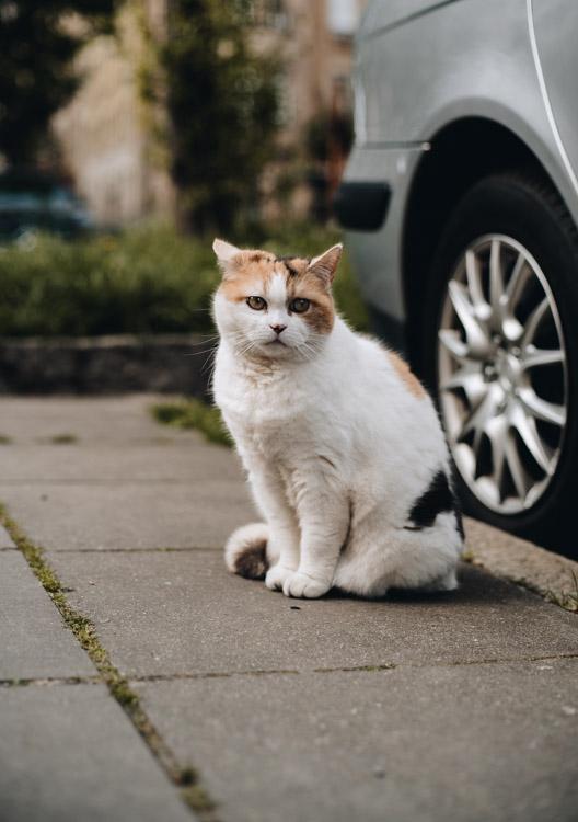 Katze in Stuttgart