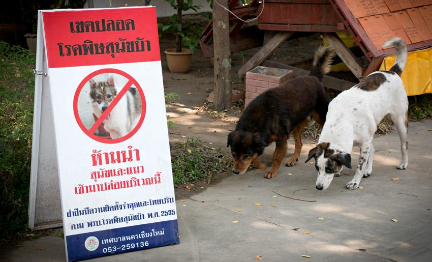 Rebellische Hunde
