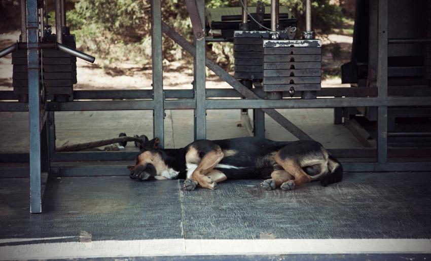 Hart trainiert: Hund in Salta