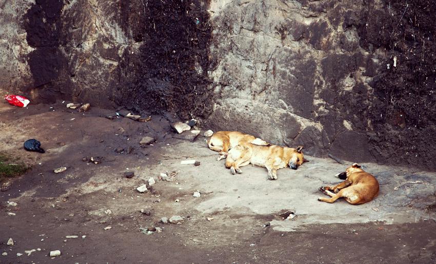 Straßenhunde in Santiago