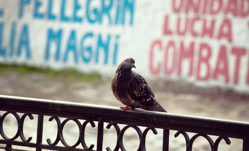Taube vor einem politischen Graffiti am Fluss Río Mapocho