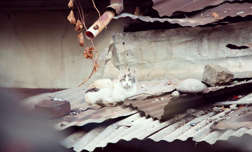 Katze im Barrio Brasil