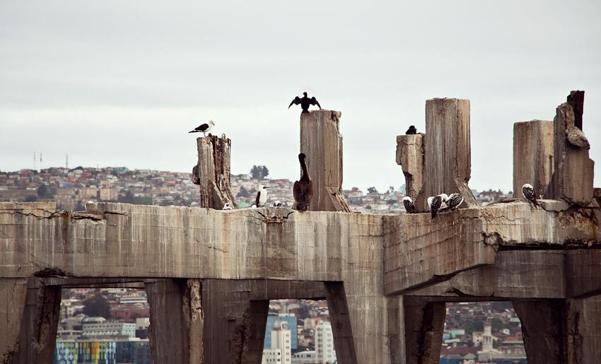 Tiere am Strand von Valparaíso