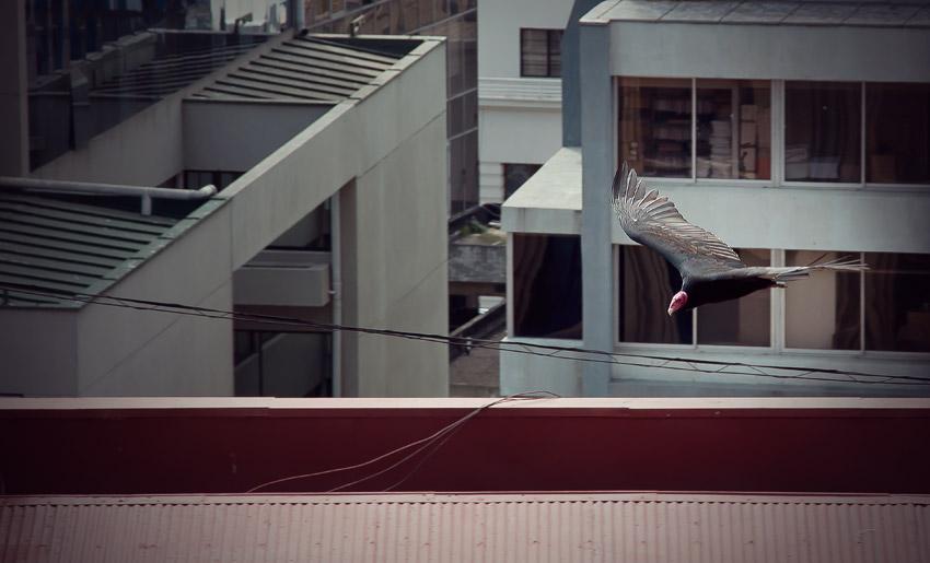 Vogel in Valparaíso