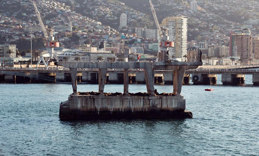 Walrosse vor Valparaíso