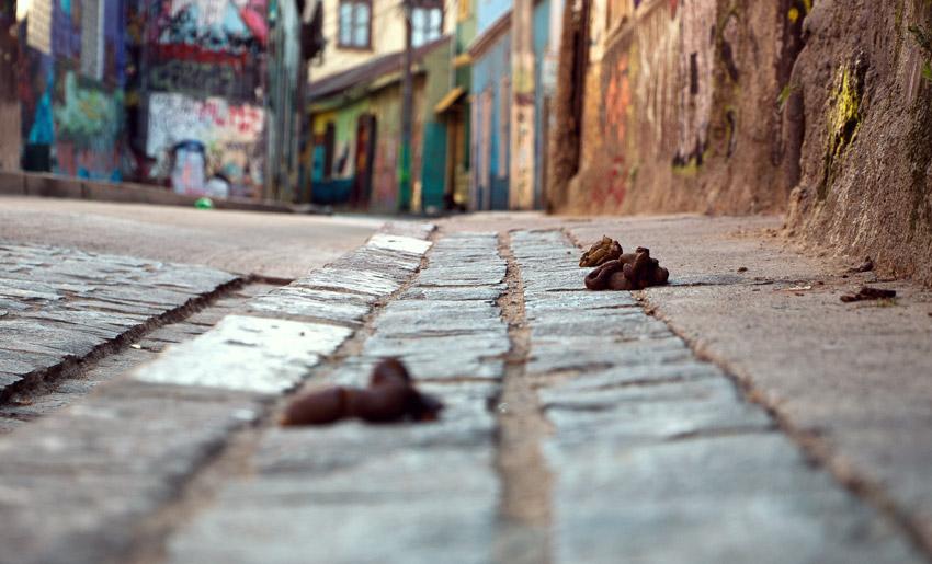 Das Ergebnis der vielen Straßenhunde in Valparaíso