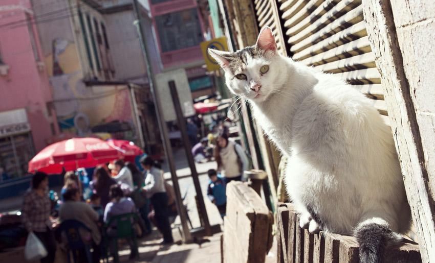 Katze in Valparaíso